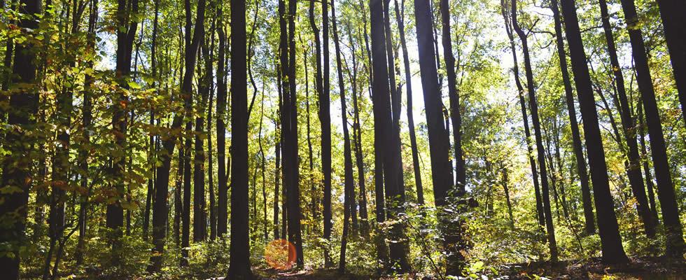 Foresta Umbro-Toscana legna da ardere