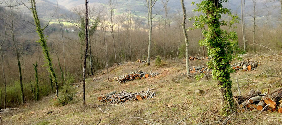 Raccolta legna Umbra