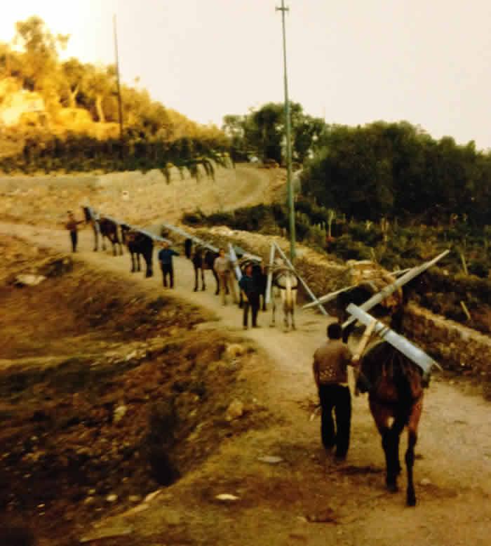 Trasporto legna Norgiolini Ecocalore
